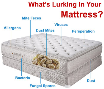 Dust-mites in your mattress cause allergies